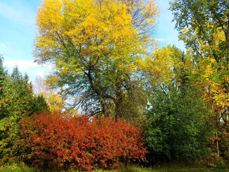Autumn Trees by Schvenn