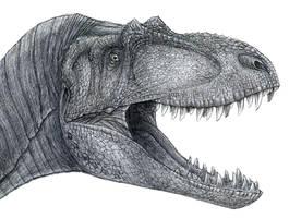 Albertosaurus by yty2000
