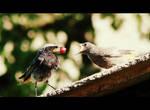 birds by Monika099