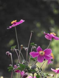 flowers 2 by stucker1987