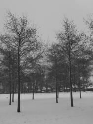 snowy trees by stucker1987
