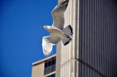Toronto City Hall by goss0063