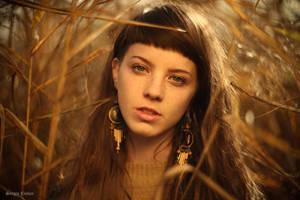 Autumn In Transilvania by Sssssergiu
