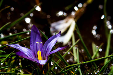 Purple flower light catcher by VitoDesArts