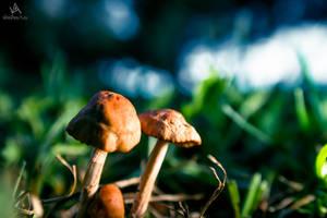 Look, mushroom!! 4/3 by VitoDesArts