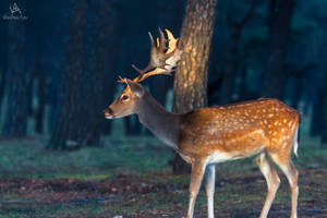 Young deer sideway by VitoDesArts