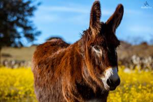Donkey #2 by VitoDesArts