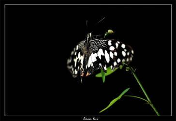 Butterfly 3 by liranlevi0