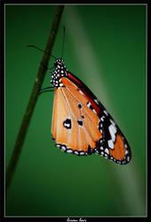 Butterfly 2 by liranlevi0
