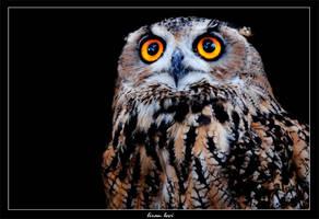 Owl by liranlevi0