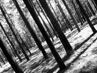 Into the Trees by EchoGrey