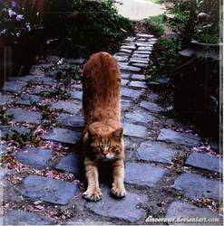 little cat by dinoorawr