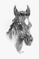 Afra by Ponytail