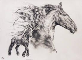 Iggy by Ponytail