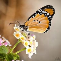 Nature is a Butterfly by Eibography