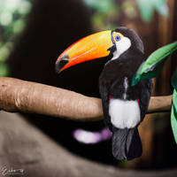 Toucan by Eibography
