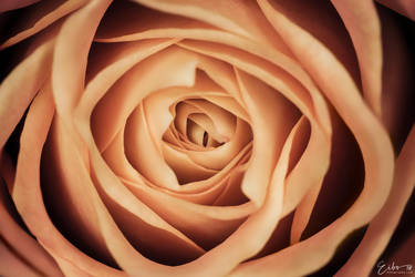 Deep Inside A Rose by Eibography