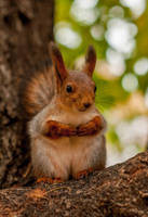 Squirrel6 by NRichey