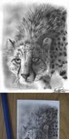 ACEO-Cheetah Pencil Drawing by chandito