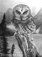 Saw-Whet Owl by chandito