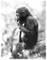 Baby Gorilla by chandito