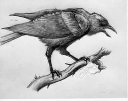 Raven by 666gothicblackrose