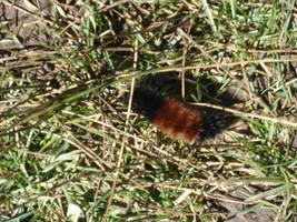 Caterpillar 2 by angelstar22