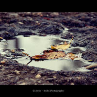 .:Autumn's Requiem:. by bogdanici