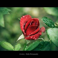 .:Goodbye My Lover:. by bogdanici