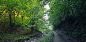 .:Soimos Creek:. by bogdanici
