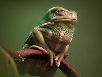 Waxy Monkey Frog by ktalbot
