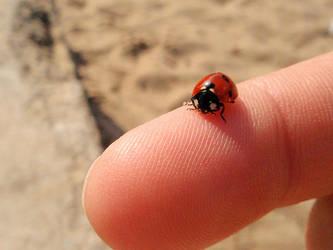 ladybug by ReginaldBull