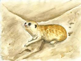 Curious Meerkat by Tabascofanatikerin