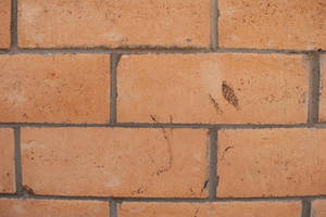 Brick Wall by stock-pics-textures