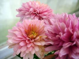 Flowers by TheJenjineer