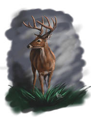 White Tail Buck Portrait by Belote-Art