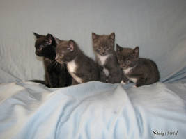 4 Kittens by cindy1701d