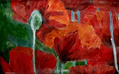 poppies by scheinbar