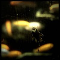Goldfische Und Ein Putzer by scheinbar