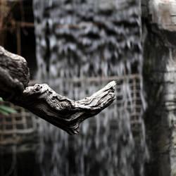 Old Wood by scheinbar