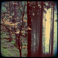 Winterwalddipty by scheinbar