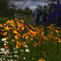 Blumenwiese by scheinbar