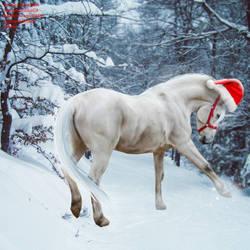 Snow Pony by midholly