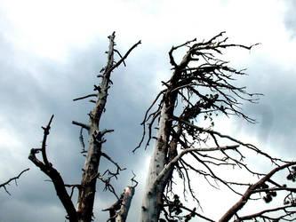 A dead tree. by falc0n2600