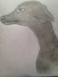 Whippet by Charleigh95