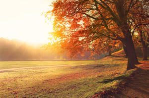 Autumn in Trondheim by artbyslaiz