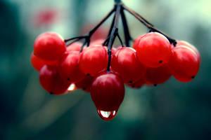 Those Red Berries II by artbyslaiz