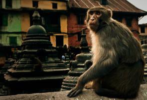 The Ape in Kathmandu by artbyslaiz