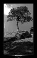 Rock Tree by kraeos