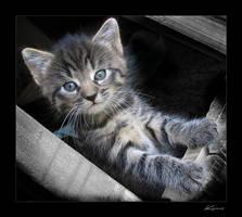 Kitten I by kraeos